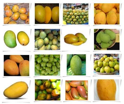 mangovar_4