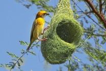 દુનિયાભરના પશુ-પક્ષીના માળા, આર્કિટેક્ટને આપી શકે છે ટક્કર