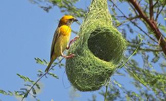 જોવો  દુનિયાભરના પશુ પક્ષીઓનું રેહ્થાન