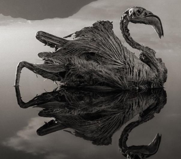 પ્રાણી ને બાળી નાખે છે આ સરોવર!