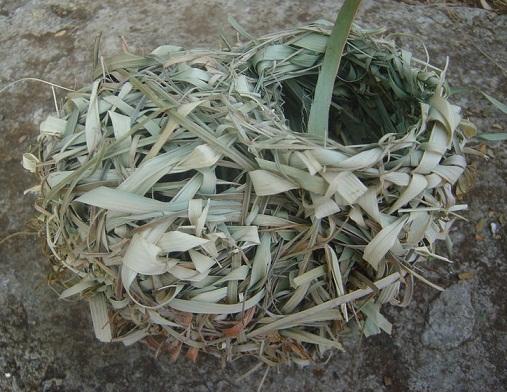 Village Weaver Bird Nest