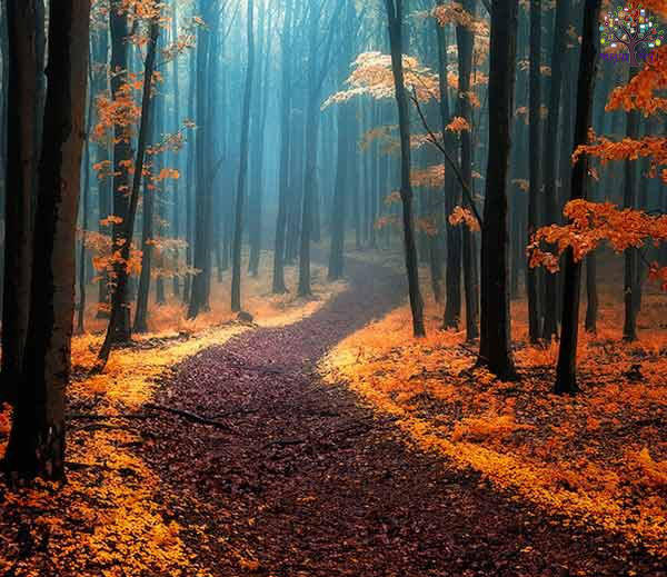 Mystical forests, where there would also be expected to see image