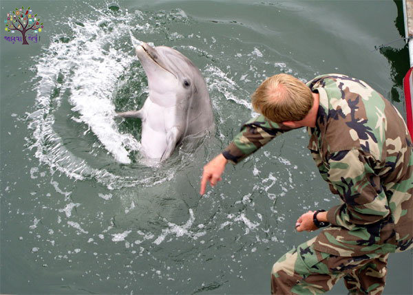 worlds largest stockpile at seattle of nuclear weapons guarded by dolphin in janvajevu.com