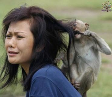 ફટકે જ્યારે પ્રાણીઓનું, થાય ધમાલ કોમેડી, હસાવી-હસાવી બઠ્ઠા વાળશે