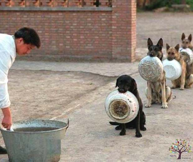 China is taking the line of police dogs to feed, there Viral Photos