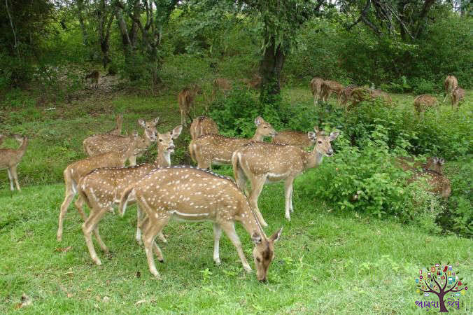 Vacation Visiting Wildlife, The Best Place in India