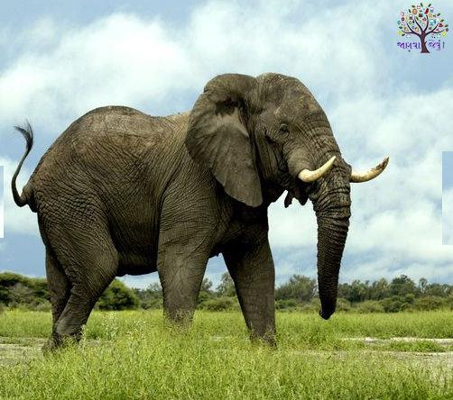 The Amazing photographs of elephants around the world, click photographar