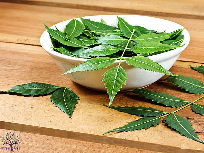 Neem beneficial to health