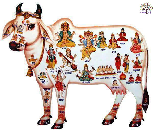 Our cows and our tradition of mother