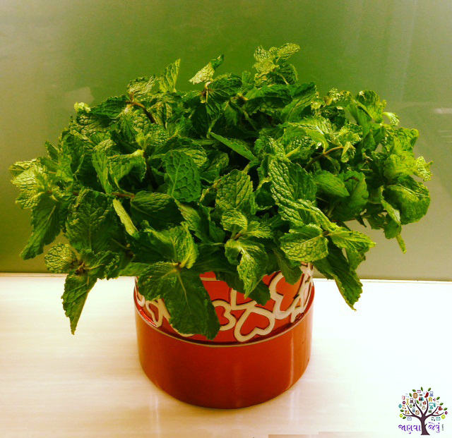 Mint for the health of the Best