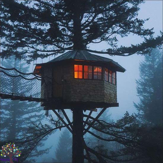 The house is built on one of the leaves of many trees, when you get the Idea