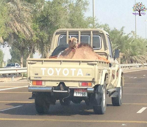Funny scenes ranging from the curious amateur, It Happens Only In Dubai!