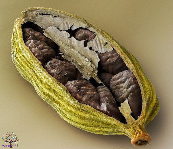 Use the 8-way small cardamom, are large illnesses