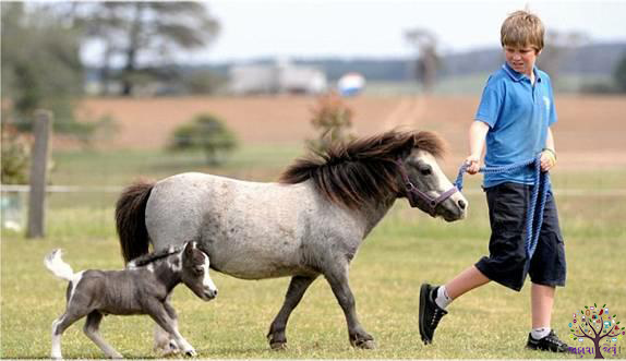 The youngest horse in Britain, the US in world record