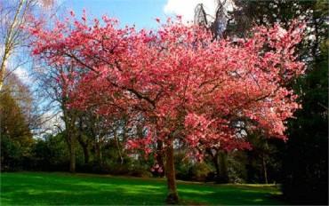 ગજબ! એક જ વૃક્ષ પર આવે છે ૪૦ પ્રકારના ફળ