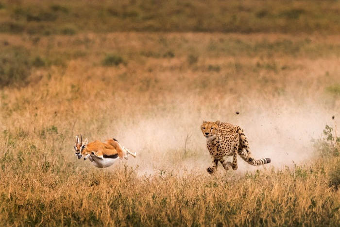 The most impressive photos from national geographic 2015