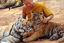 tiger temple in thailand | Janvajevu
