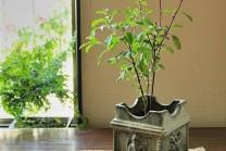 તમે ઘરમાં તુલસીનો છોડ રાખો છો? તો ધ્યાનથી વાંચો આ બાબતોને