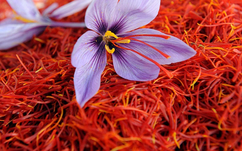 saffron_flower_3097101k