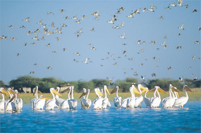 Nalsarovar-Bird-Sanctuary
