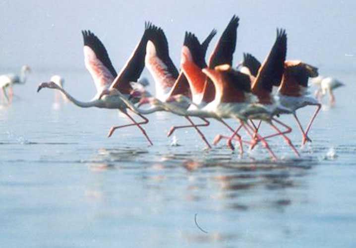 lothal_np_birds_nal