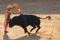 Bull સાથે પંગો લેવો સારું નથી, આ છે તેનું જીવતું જાગતું ઉદાહરણ