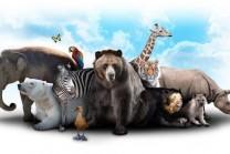 random-animal-facts