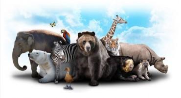Animal ની અજાણી આ વાતો ચોક્કસ તમે તમારા ફ્રેન્ડને જણાવશો!!