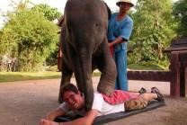 Masajes-de-elefantes