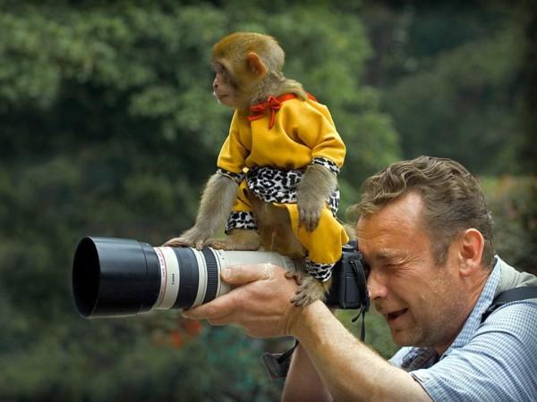 Funny_Monkey_Wallpape
