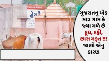 ગુજરાતનુ એક માત્ર ગામ કે જ્યા મળે છે દૂધ, દહીં, છાસ મફત !!! જાણો એનુ કારણ
