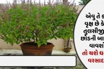 એવુ તે કયુ વૃક્ષ છે કે જે તુલસીજી ના છોડની બાજુમા વાવશો, તો થશે ધનનો વરસાદ..