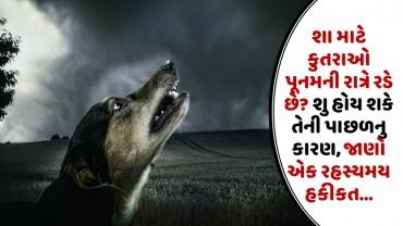 શા માટે કુતરાઓ પૂનમની રાત્રે રડે છે? શુ હોય શકે તેની પાછળનુ કારણ, જાણો એક રહસ્યમય હકીકત…