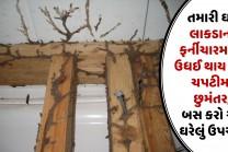તમારી ઘરે લાકડાના ફર્નીચારમાંથી ઉધઈ થાય જશે ચપટીમા છુમંતર, બસ કરો આ ઘરેલું ઉપચાર
