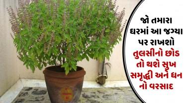 જો તમારા ઘરમાં આ જગ્યા પર રાખશો તુલસીનો છોડ તો થશે સુખ સમૃદ્ધી અને ધન નો વરસાદ