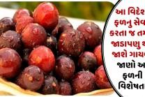 આ વિદેશી ફળનુ સેવન કરતા જ તમારૂ જાડાપણુ થઇ જાશે ગાયબ, જાણો આ ફળની વિશેષતા