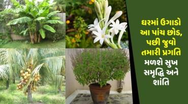ઘરમાં ઉગાડો આ પાંચ છોડ, પછી જુવો તમારી પ્રગતિ મળશે સુખ સમૃદ્ધિ અને શાંતિ