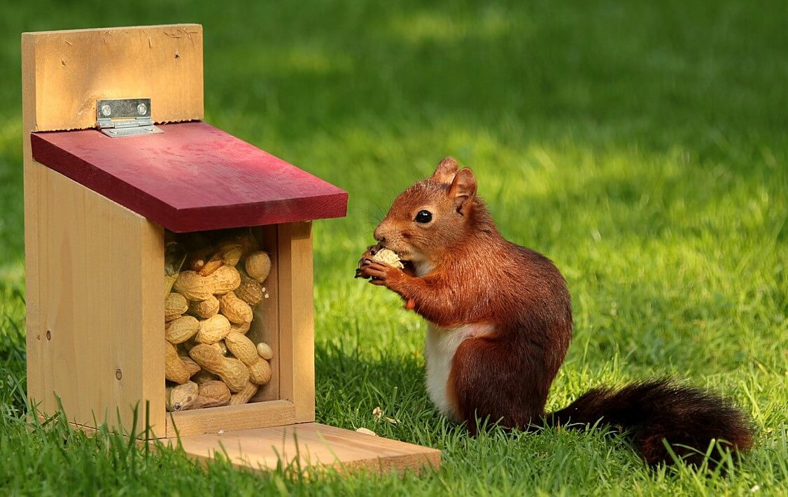 squirrel-eating-peanuts
