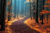 રહસ્યમયી જંગલો, જ્યાં ગુમ થવું પણ ગમશે, જુઓ તસવીર