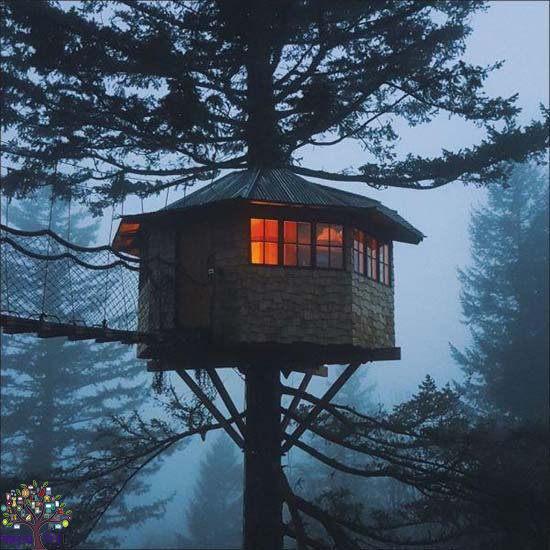 ઝાડ પર બંધાયું છે આ ઘર, તમે પણ મેળવો આઈડિયા