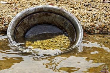 જાણો… ભારતની આ નદીમાંથી નીકળે છે સોનું