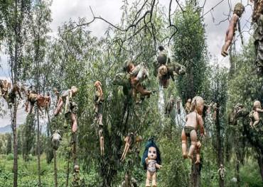 આઈલેન્ડની આ જગ્યાએ લોકો માને છે ભૂત, વૃક્ષો પર ટીંગાય છે બાળકોના પુતળા