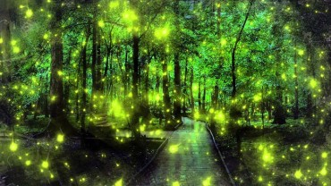 WOW!! કોંક્રિટના જંગલોની વચ્ચે કુદરતનો દિલકશ નઝારો