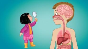 માનવ શરીર વિષે થોડી રસપ્રદ જાણવા જેવી બાબતો, જે તમે નથી જાણતા