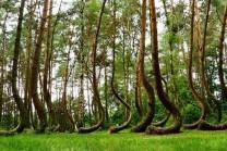 દુનિયાના આ વિચિત્ર જંગલમાં એક જ દિશા તરફ વળેલા રહે છે વૃક્ષો…!!