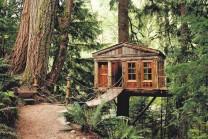 આ છે વિશ્વના સૌથી શાનદાર અને દિલકશ વૃક્ષો ઉપર બનેલ મકાન