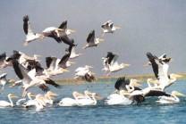અમદાવાદમાં આવેલ નળ સરોવર છે પક્ષીઓ માટે જન્નત