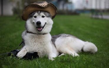 આ છે દુનિયાના સૌથી મોંધા કૂતરાંઓ, જેની કિંમત હજારોમાં નહિ પણ લાખોમાં છે