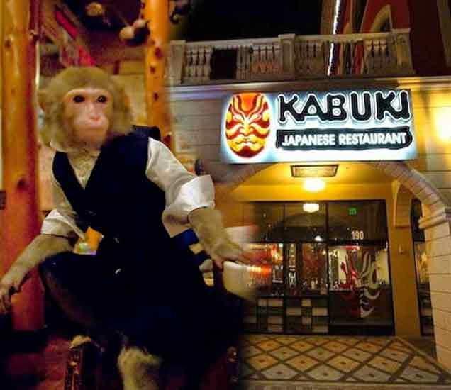 ગજબ! આ રેસ્ટોરન્ટમાં માણસો નહિ પણ વાંદરાઓ કરે છે વેઈટરનું કામ!, અચૂક જાણો