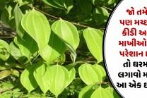 જો તમે પણ મચ્છર કીડી અને માખીઓથી પરેશાન છો તો ઘરમા લગાવો માત્ર આ એક છોડ